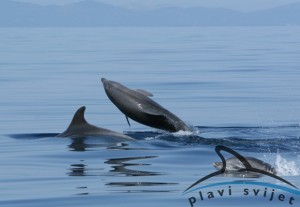 Bottlenose dolphins_Vis_090523_6_637_page_photo